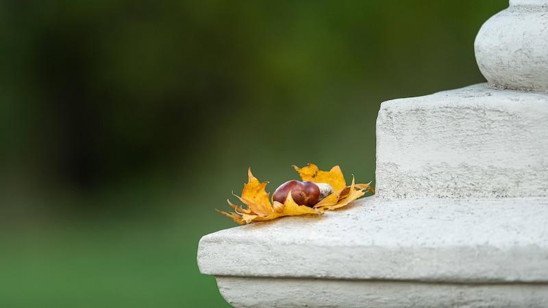 Frist zwischen Tod und Beerdigung: Das gilt in den Bundesländern