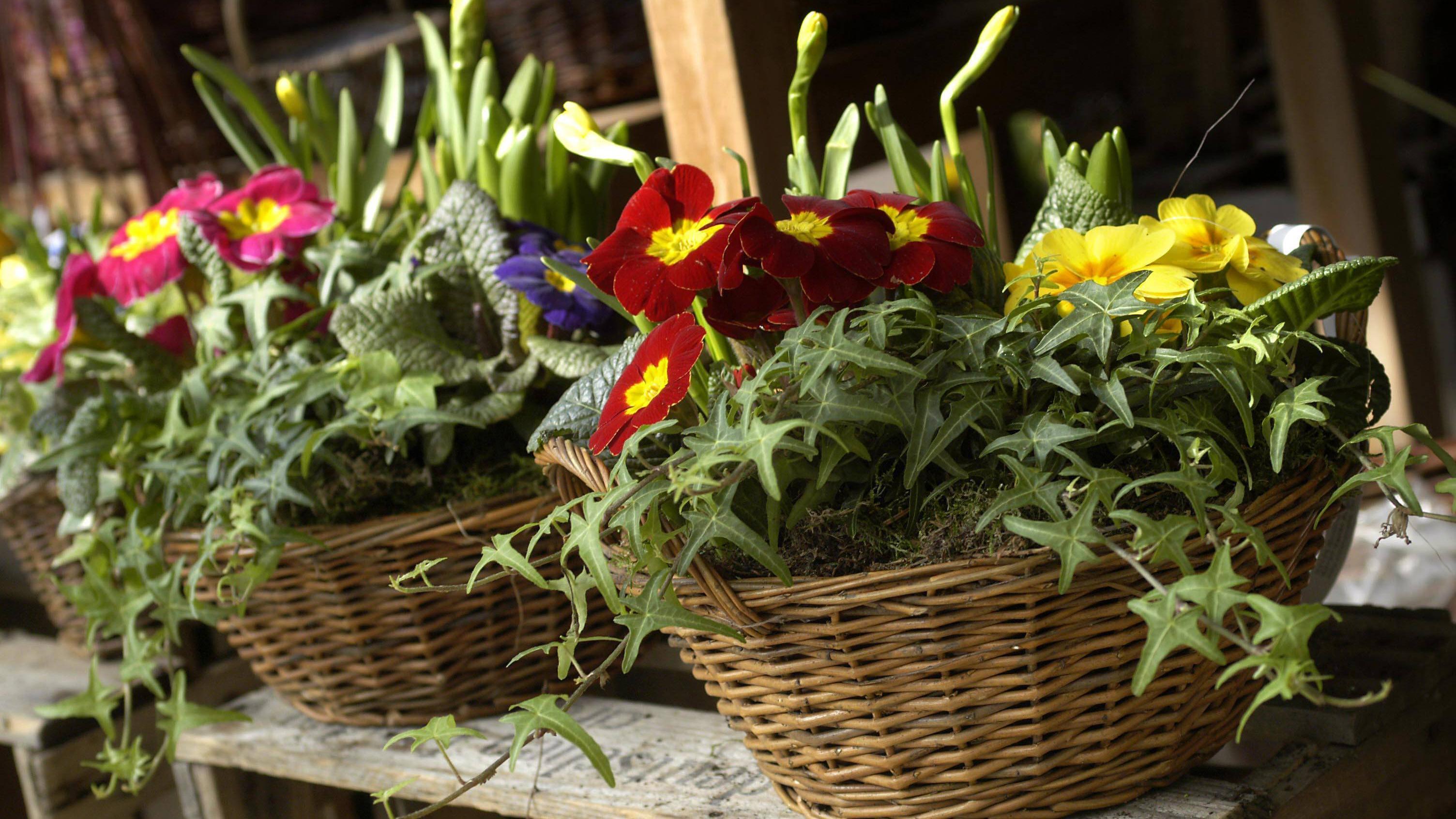Blumenzwiebeln im Topf pflanzen - das sollten Sie beachten