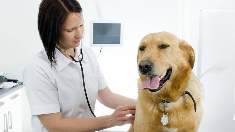 Stinkt der Hund, können auch Erkrankungen die Ursache sein.