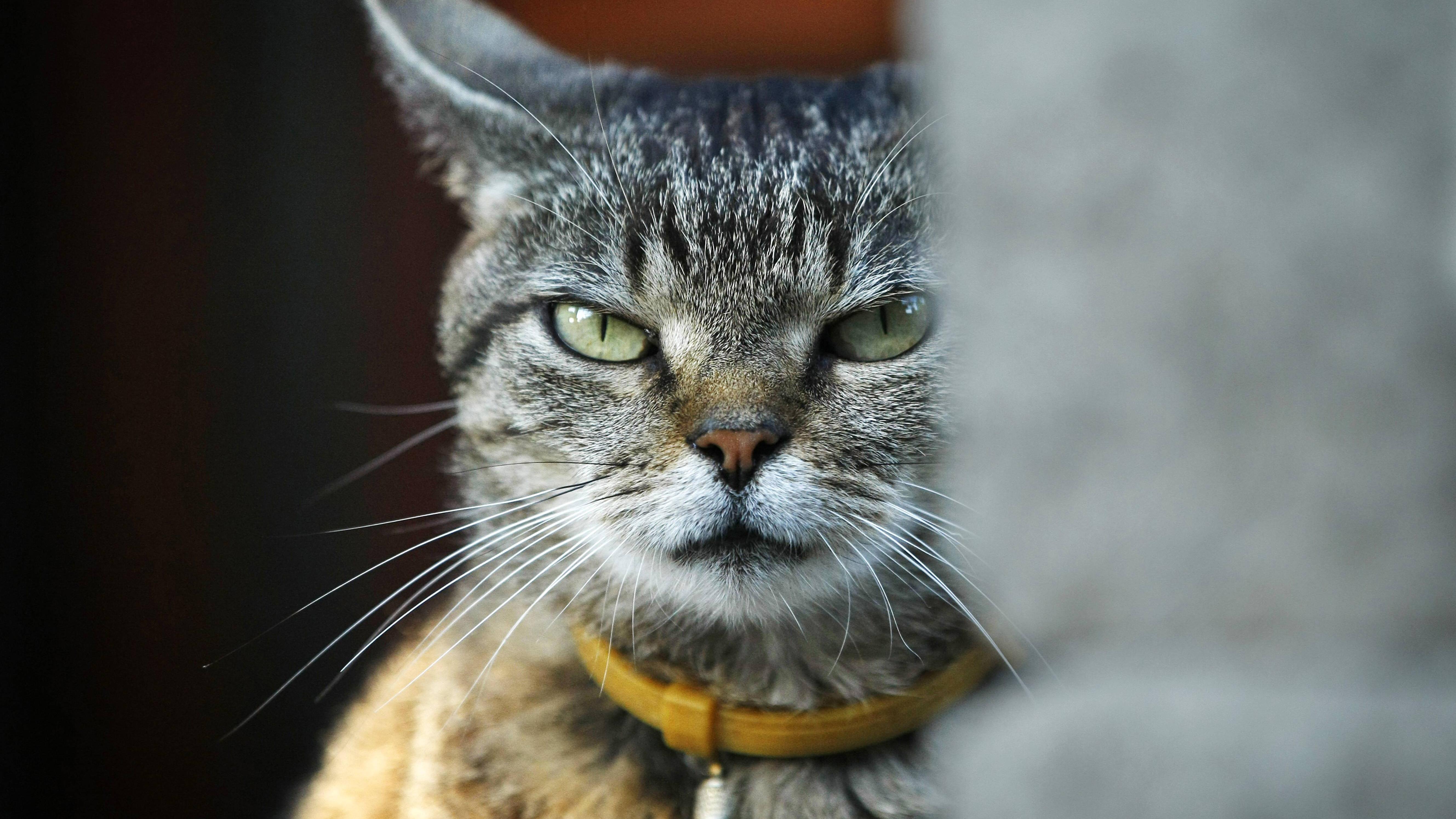 Aggressive Katze beruhigen: So gehen Sie vor