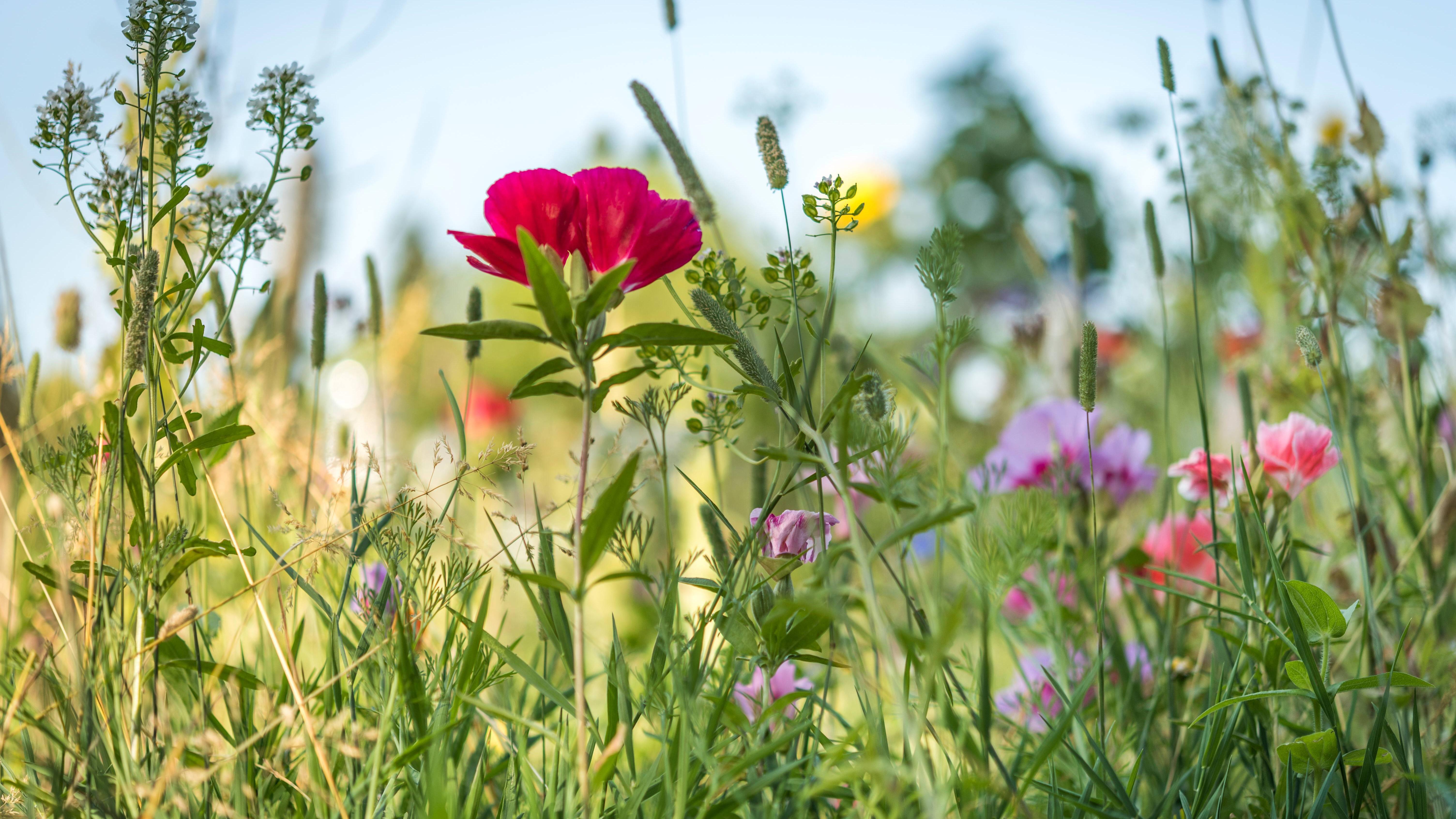 Pflanzen für den Sommer: Alles, was Sie wissen müssen