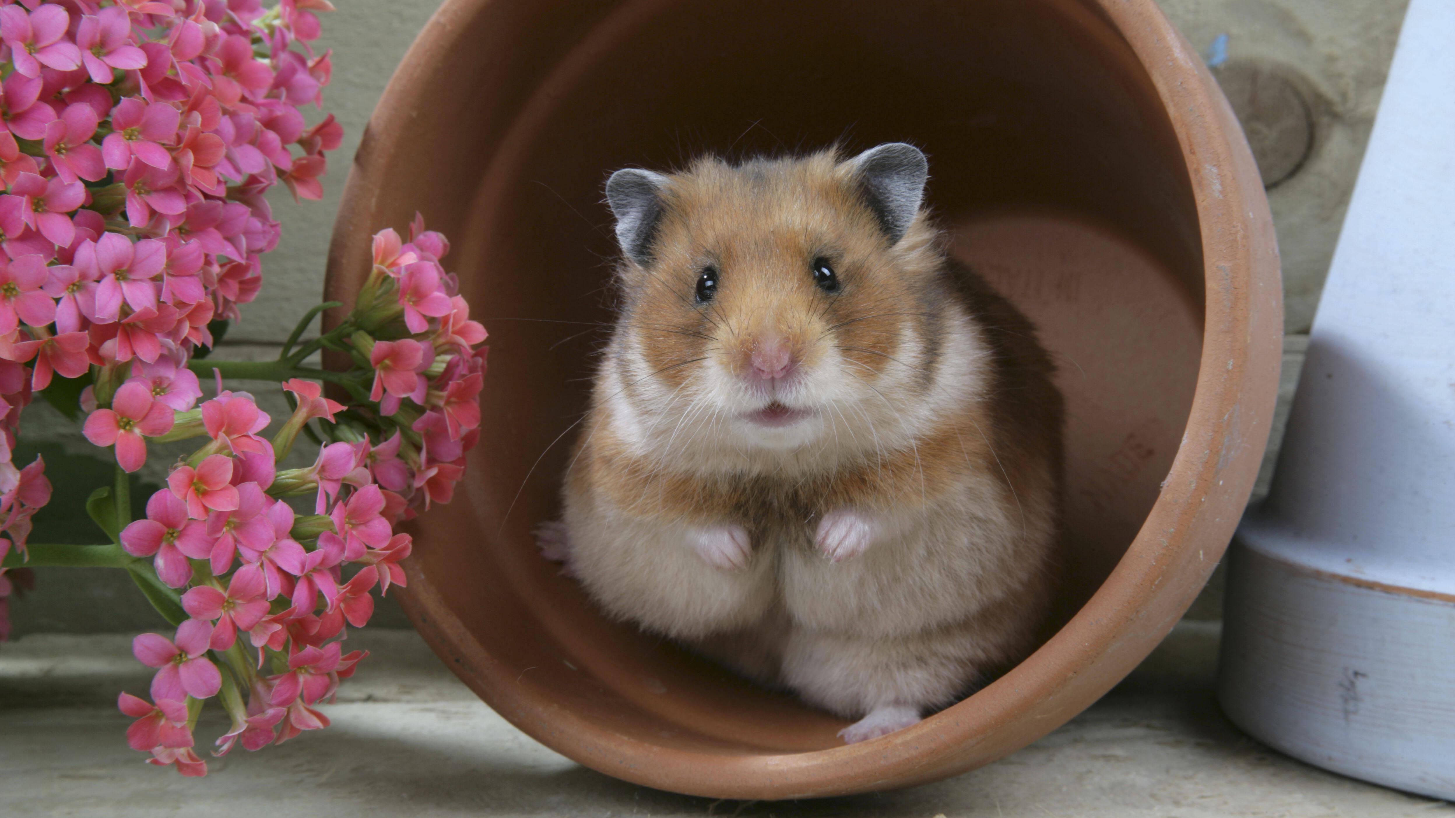 Hamsterkäfig reinigen: Darauf sollten Sie achten