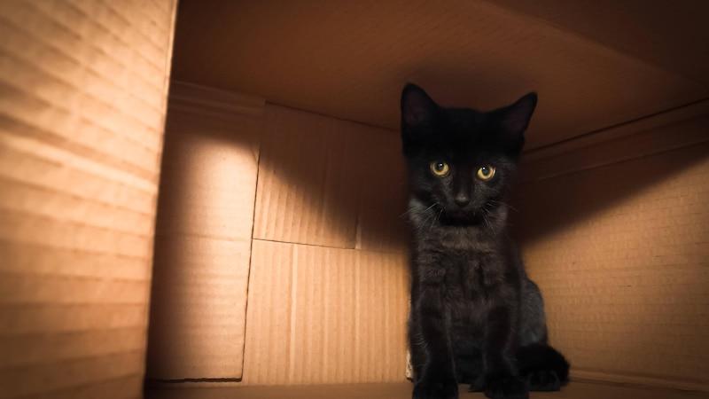 Silvester ist für viele Katzen durch die lauten Geräusche purer Stress.