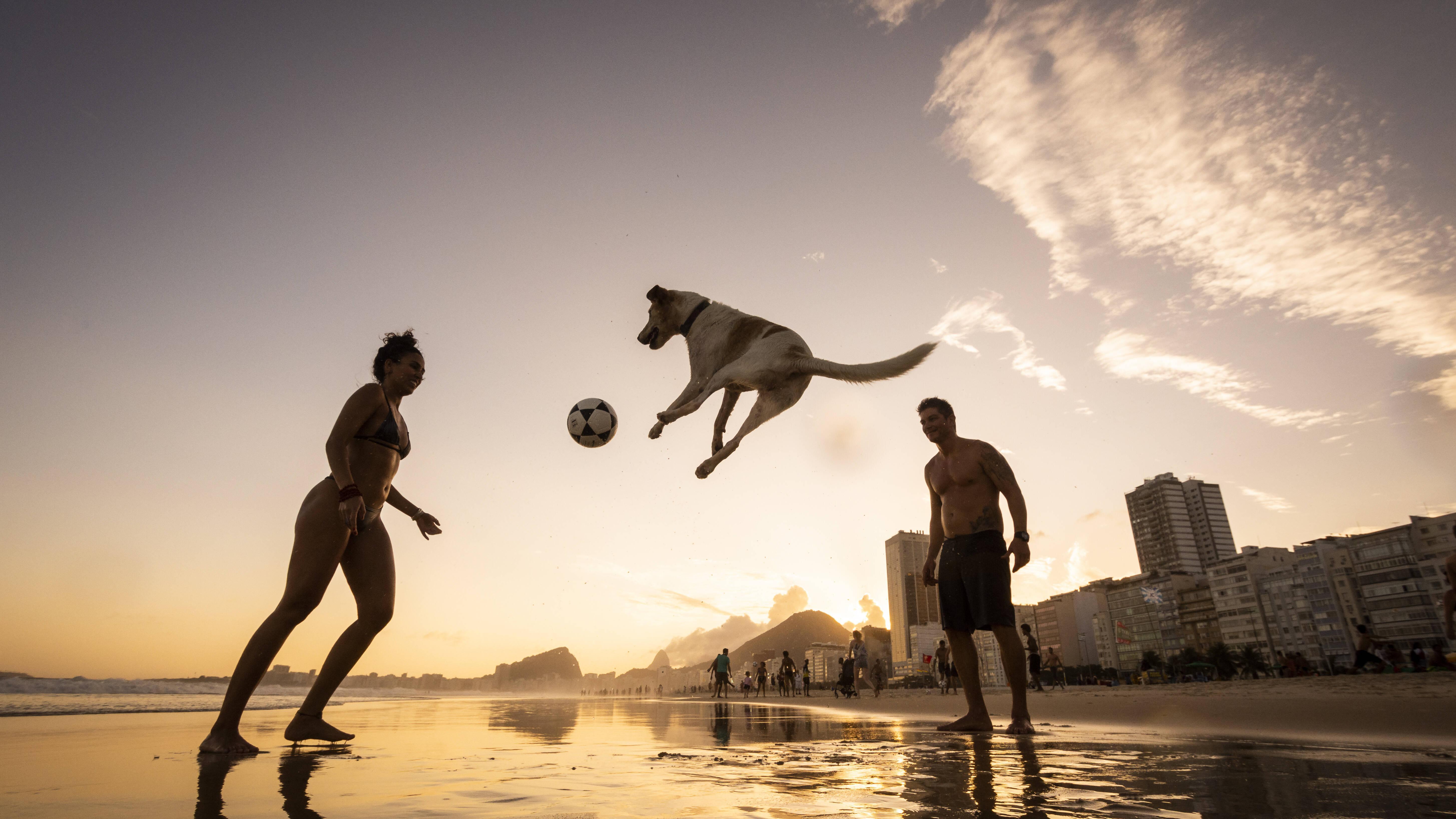 Zweithund zu altem Hund halten: Das sollten Sie beachten