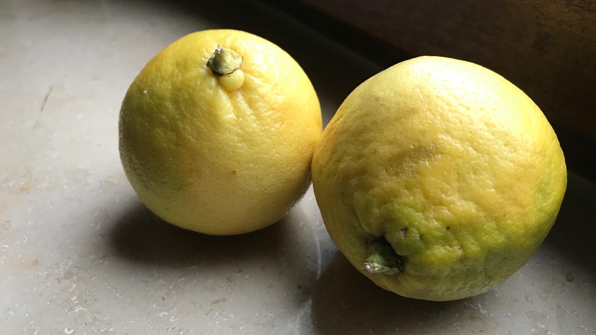 Selbstgemachtes Zitronensalz schmeckt zu Fischgerichten und Nudeln.
