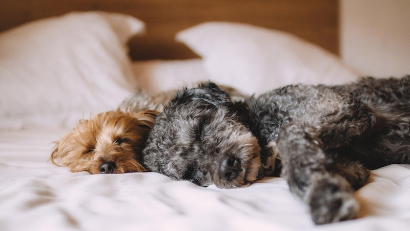 Um einen Umzug mit Hund so stressfrei wie möglich zu gestalten, können Sie einige Dinge beachten.