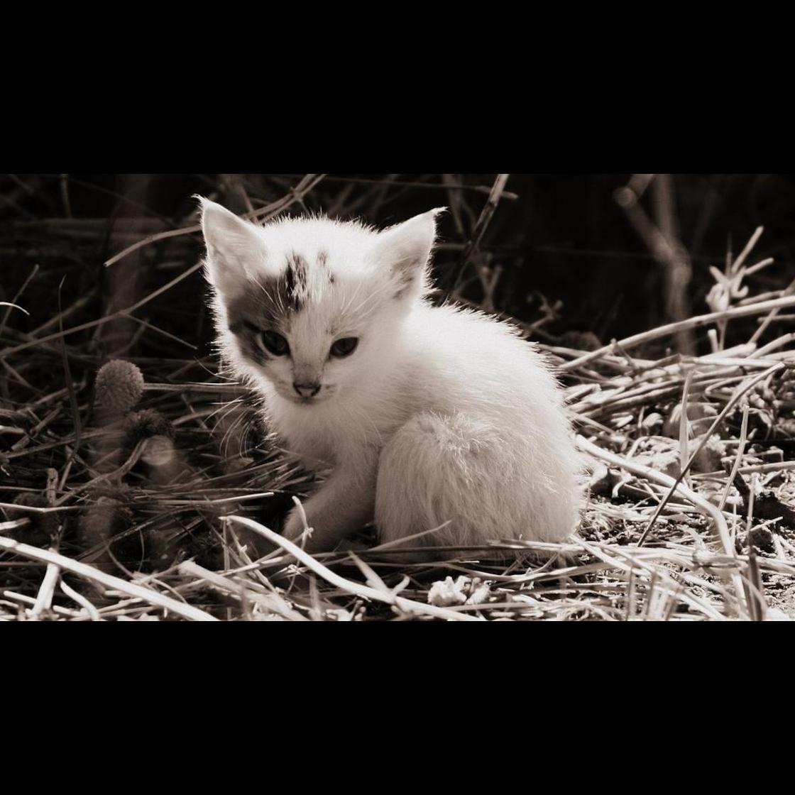 Anzeichen Geburt Katze