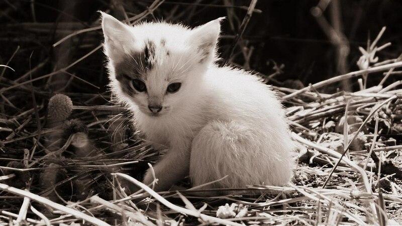Auf die bevorstehende Katzengeburt weisen verschiedene Anzeichen hin.