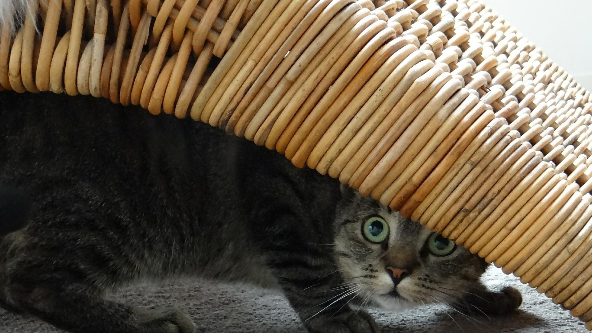 Hat eine Katze Angst vor anderen Katzen, kann das verschiedene Ursachen haben.