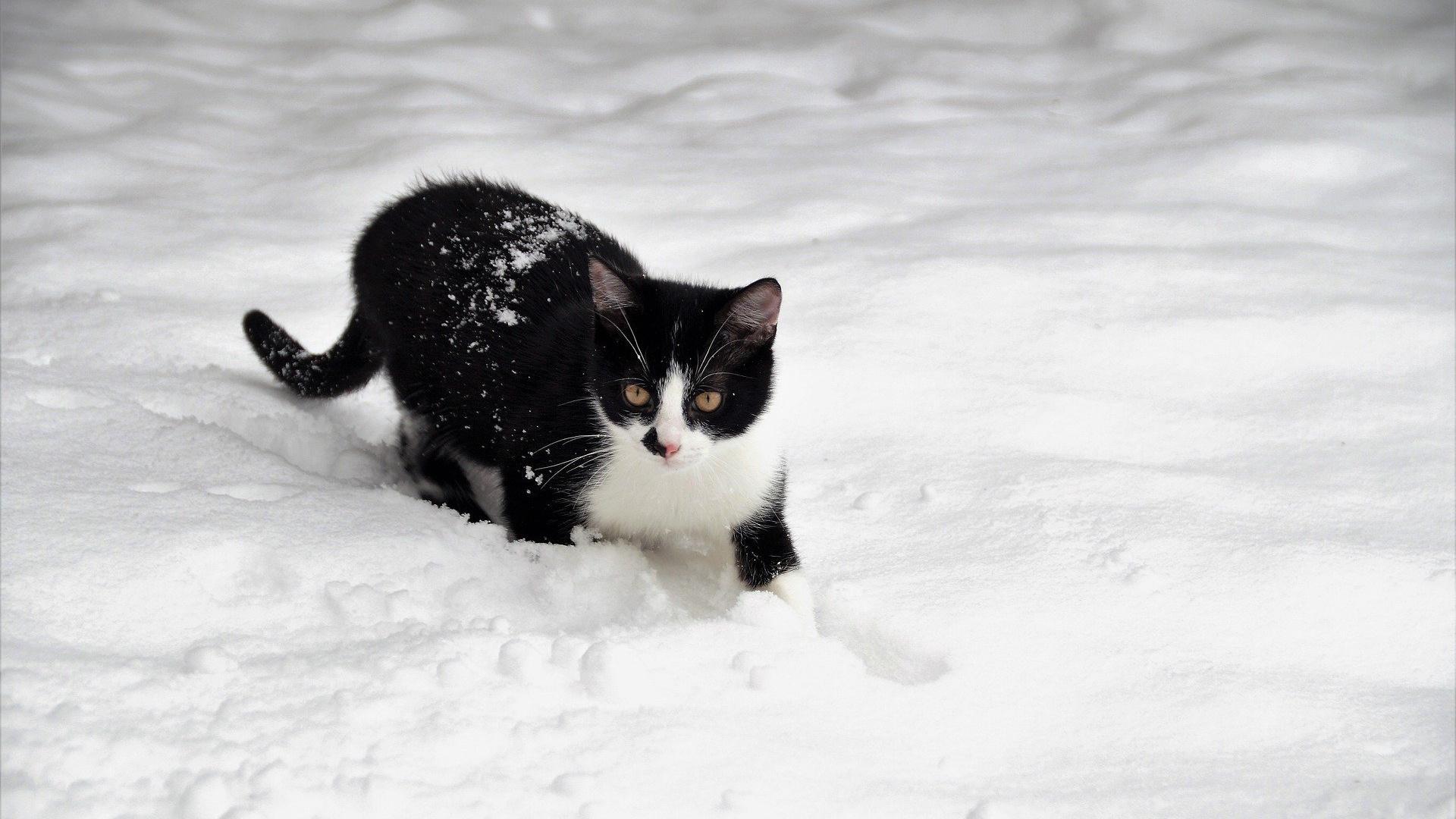 Friert eine Katze, kann das verschiedene Gründe haben.