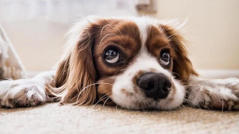 Das Entfernen von Hundeurin ist nicht immer leicht
