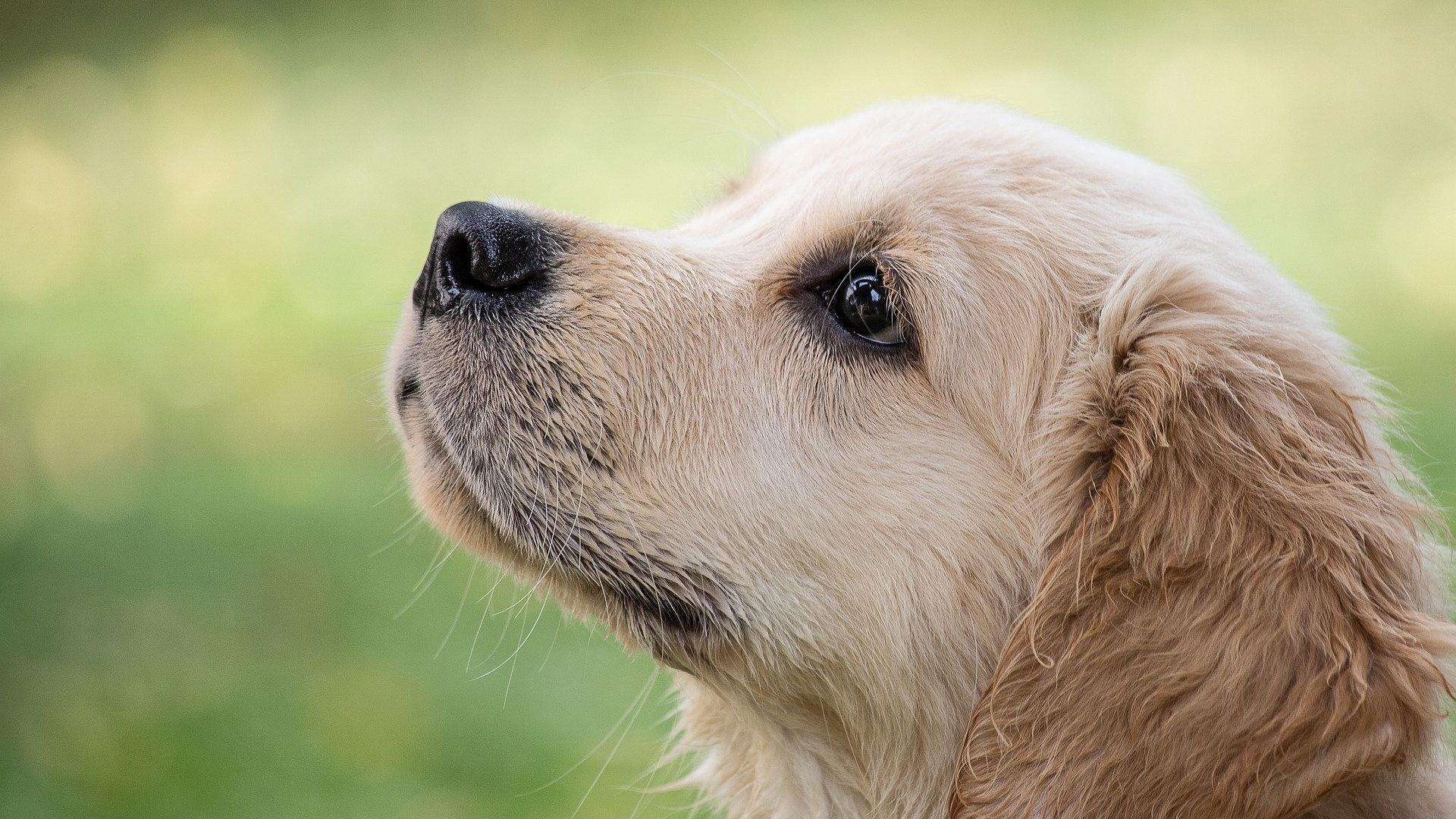 Kommt ein junger Hund in die Pubertät, testet er seine Grenzen aus.