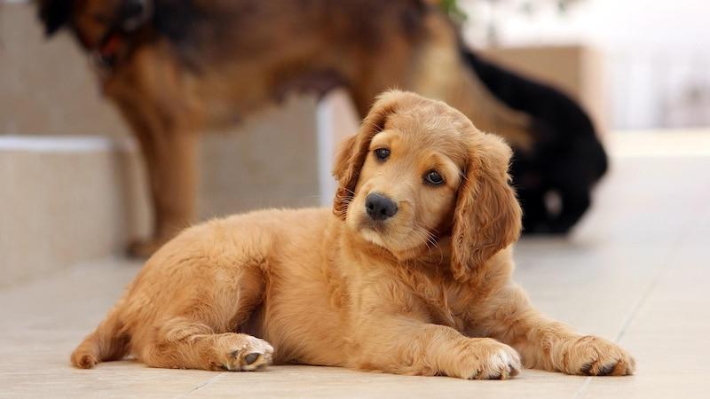 Mit dem Schaffen der Bindung zum Hund sollten Sie bereits im Welpenalter beginnen.