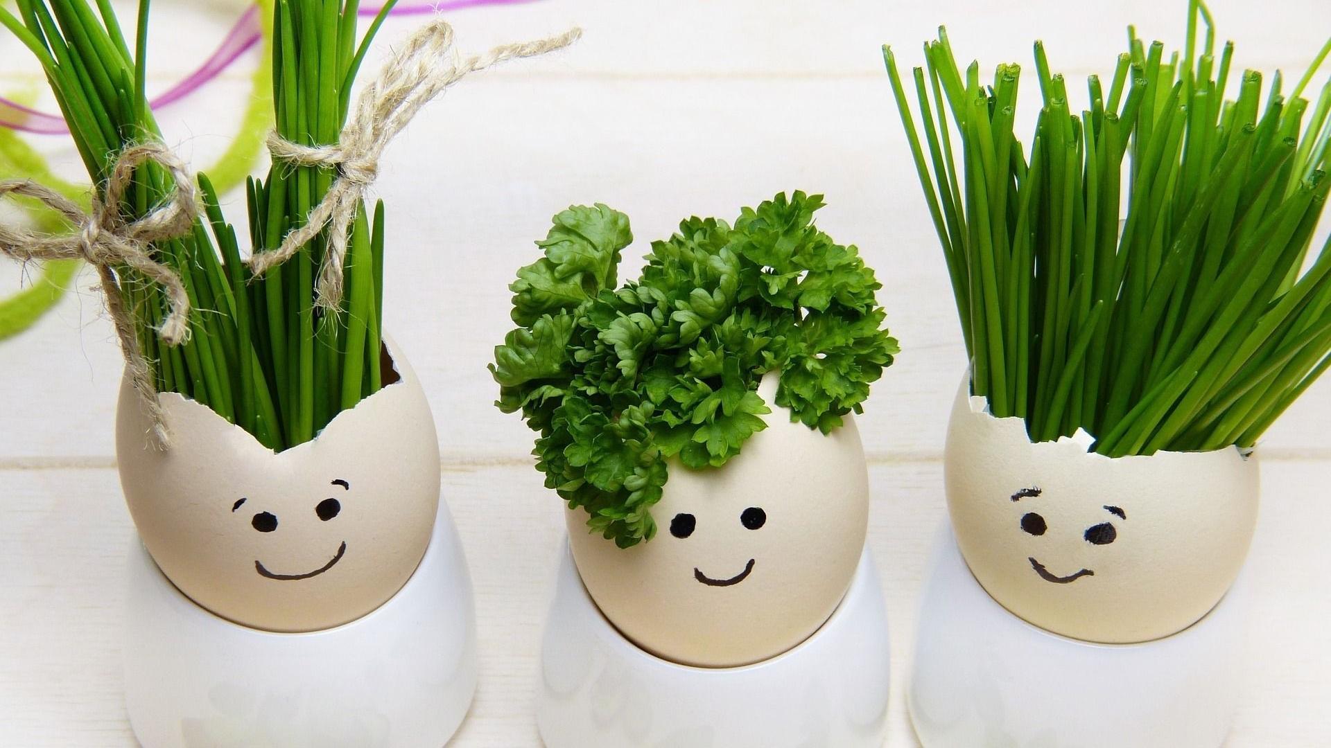 Eierschalen auf dem Kompost oder im Biomüll entsorgen oder auch weiterverwerten