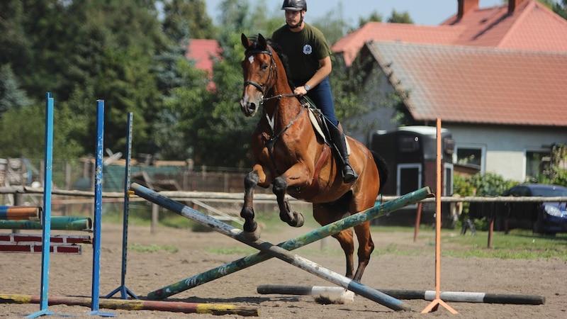 Um die Rückenmuskulatur eines Pferdes aufzubauen, gibt es verschiedene Möglichkeiten.