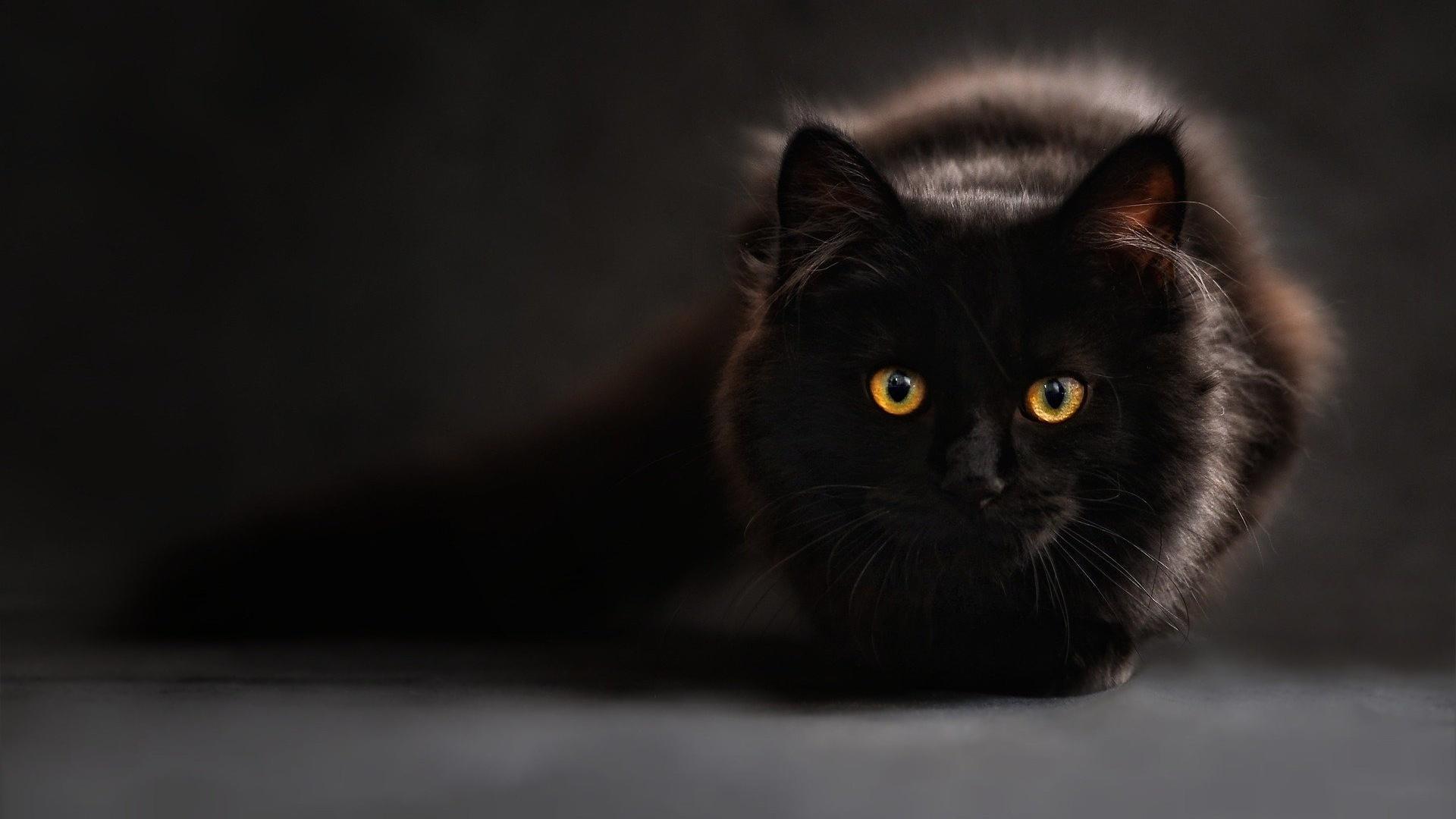 Der Aberglaube, dass eine schwarze Katze von links Unlück bringt, stammt von der Kirche.