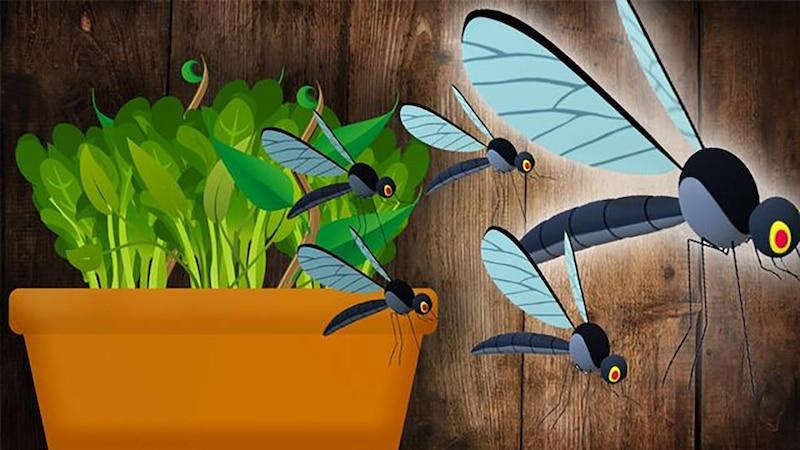 Kleine Fliegen in der Blumenerde - so werden Sie sie los