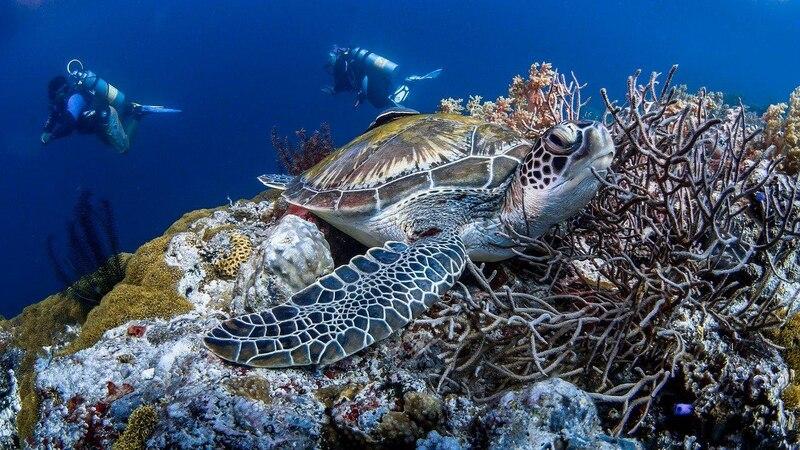 Gerätetauchen ermöglicht faszinierende Einblicke in die Unterwasserwelt.
