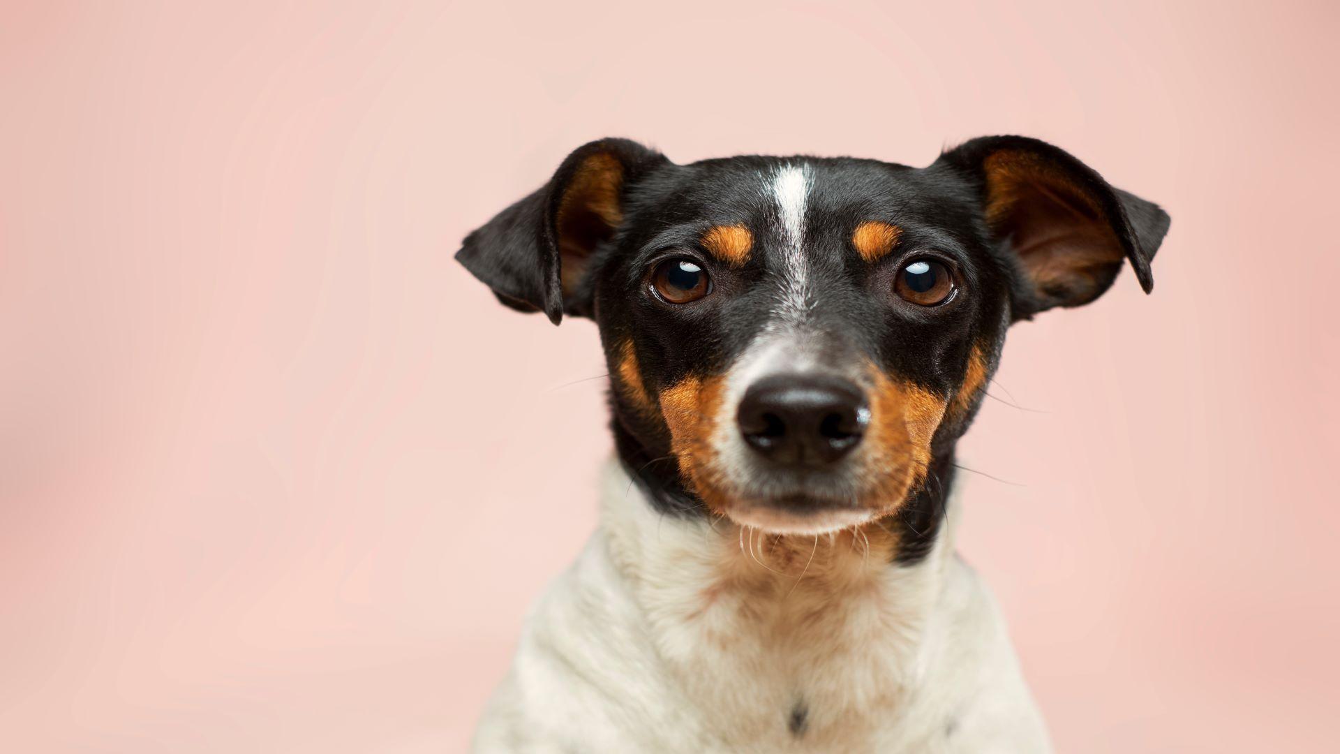 Hund stirbt an Leberversagen: So greifen Sie frühzeitig ein