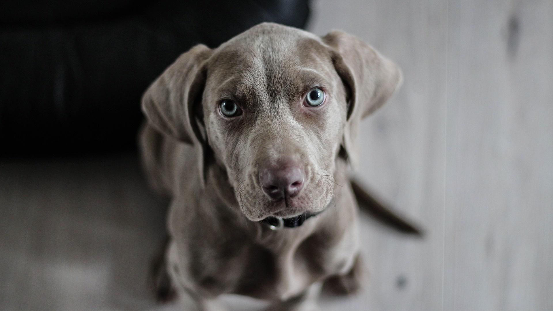 Hund stirbt: Anzeichen für Altersschwäche