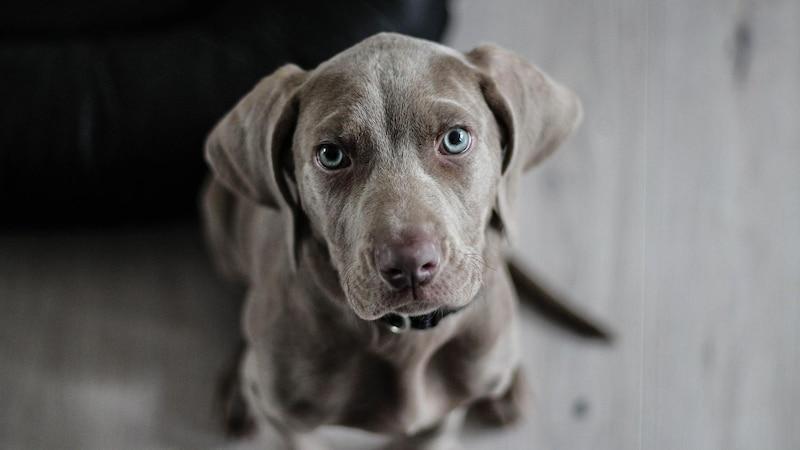 Einen Hund zum Erbrechen zu bringen, kann dem Tier helfen, ist jedoch nicht immer sinnvoll.
