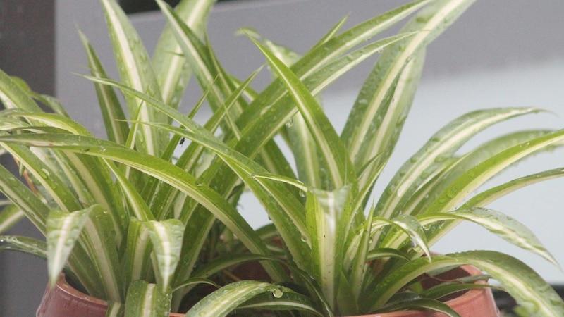 Pflanzen für den Wintergarten: Alle Infos im Überblick