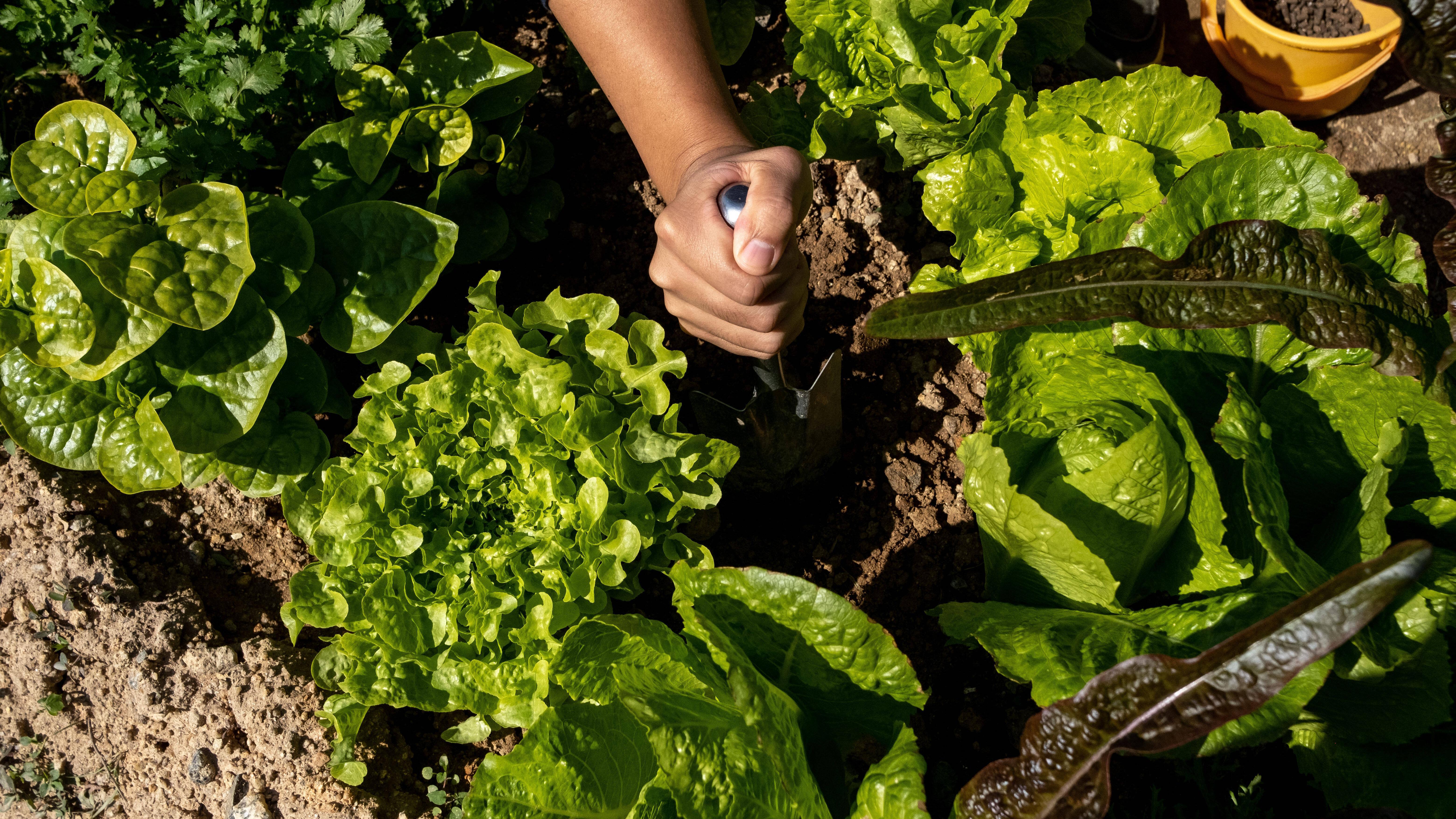 Nitrit und Nitrat: Das ist der Unterschied