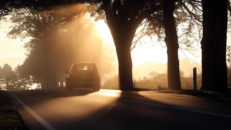 Verkehrssicherungspflicht für Bäume: Das müssen Sie wissen
