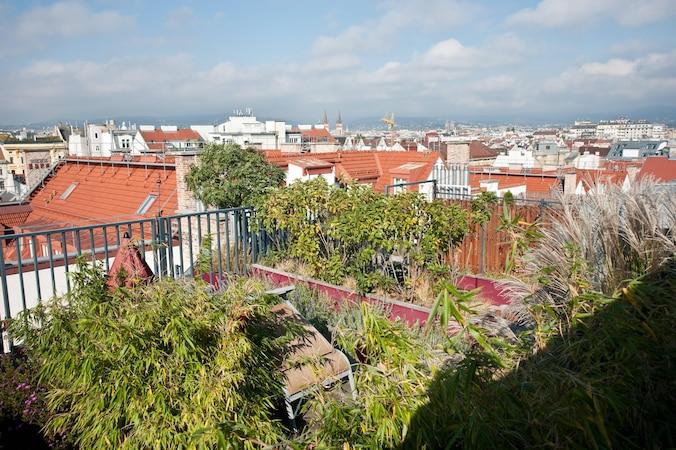 Förderung für Dachbegrünung: Diese Programme gibt es