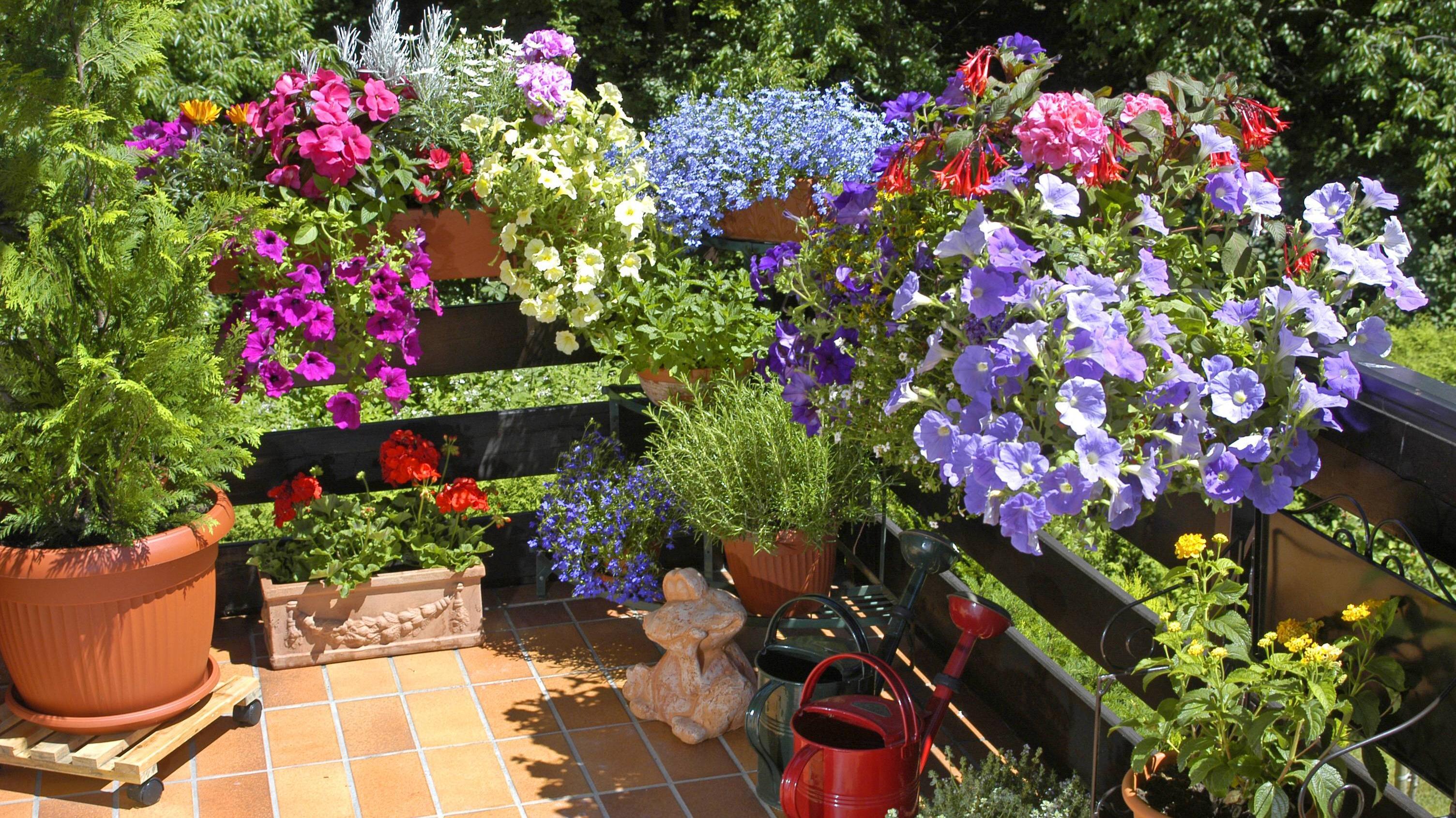 Das sind die besten Pflanzen für den Balkon