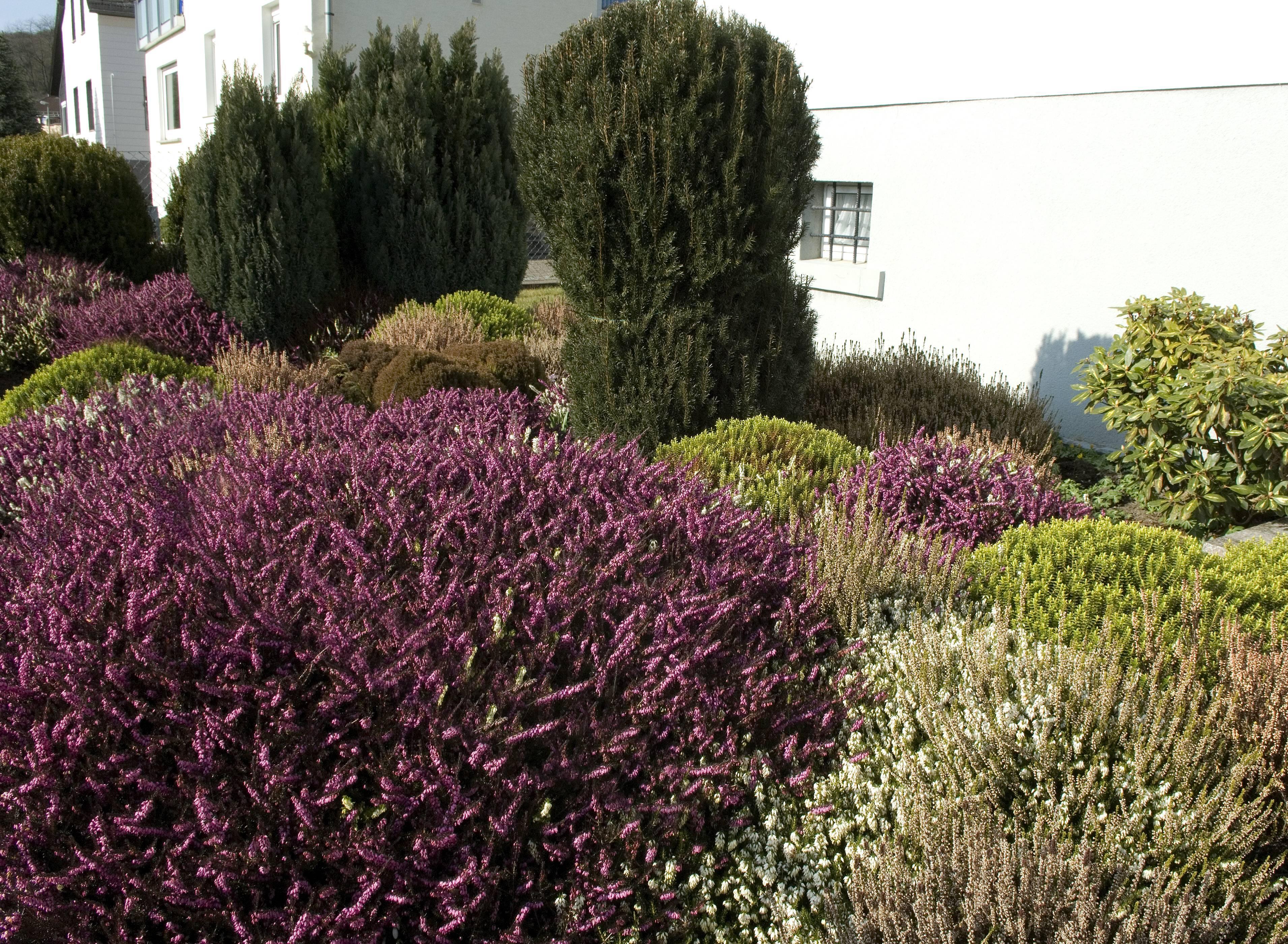 Mit den richtigen Pflanzen ist es nicht schwer, einen Vorgarten auf der Südseite zu gestalten.