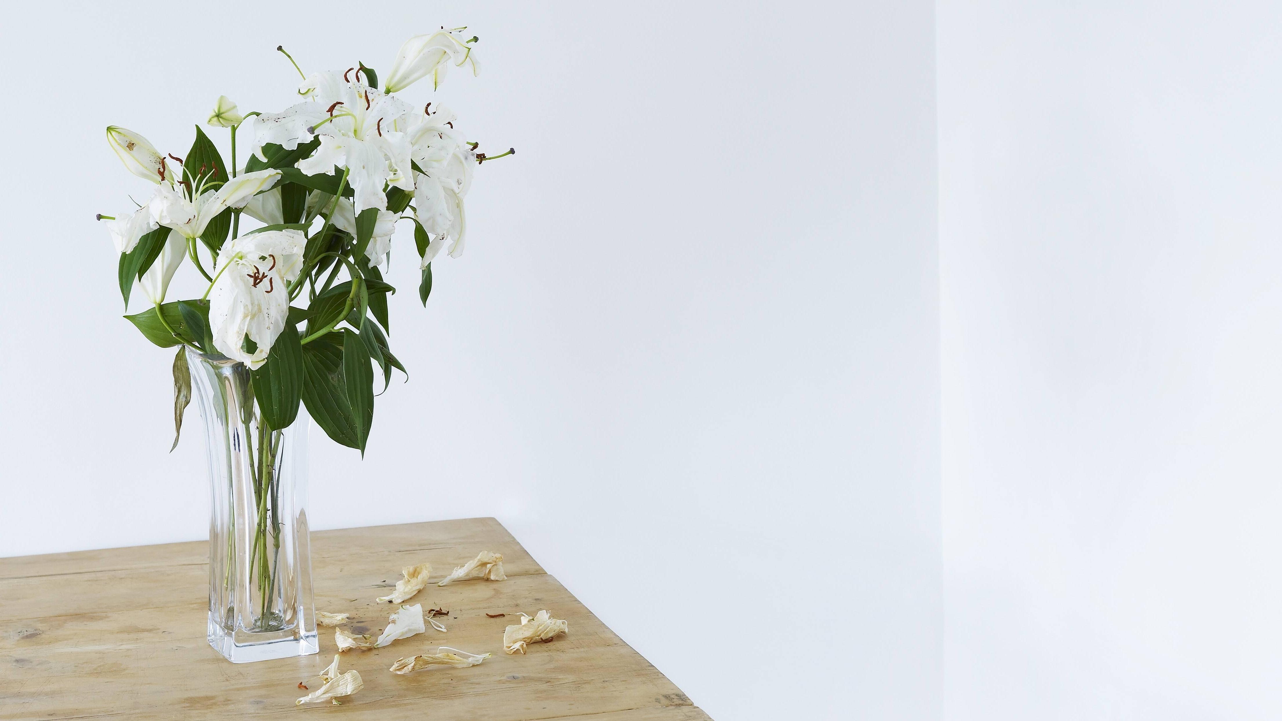 Lilien lassen sich leicht vermehren, wenn Sie etwas Zeit mitbringen.