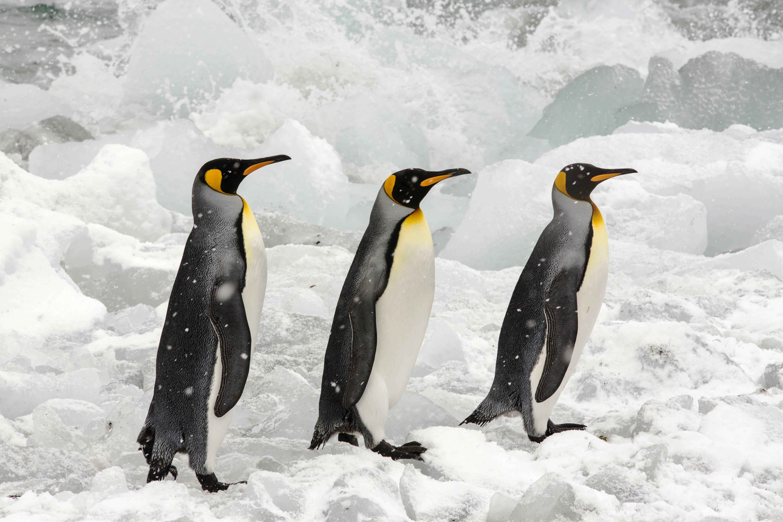 Ausrutschen bei Glatteis verhindern: Der Pinguin-Gang