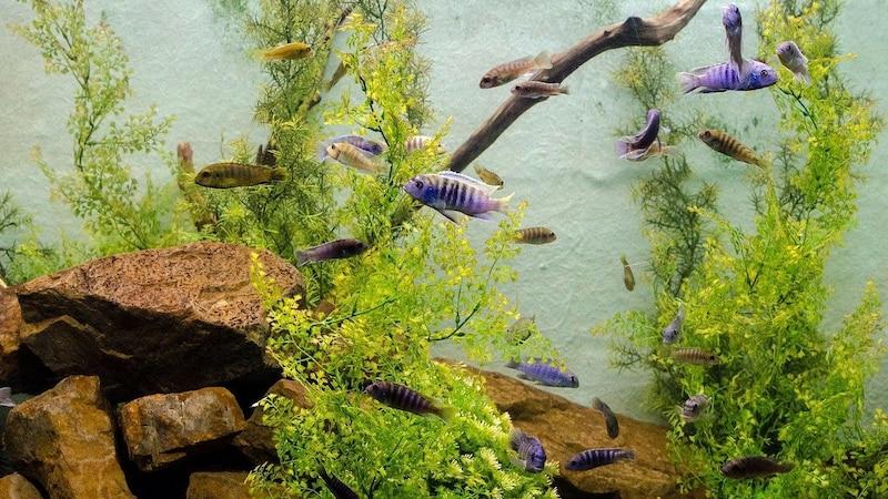 Schneckeneier im Aquarium erkennen und bekämpfen - so geht's