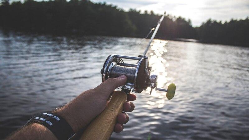 Schonzeiten für Fische: Das müssen Sie wissen