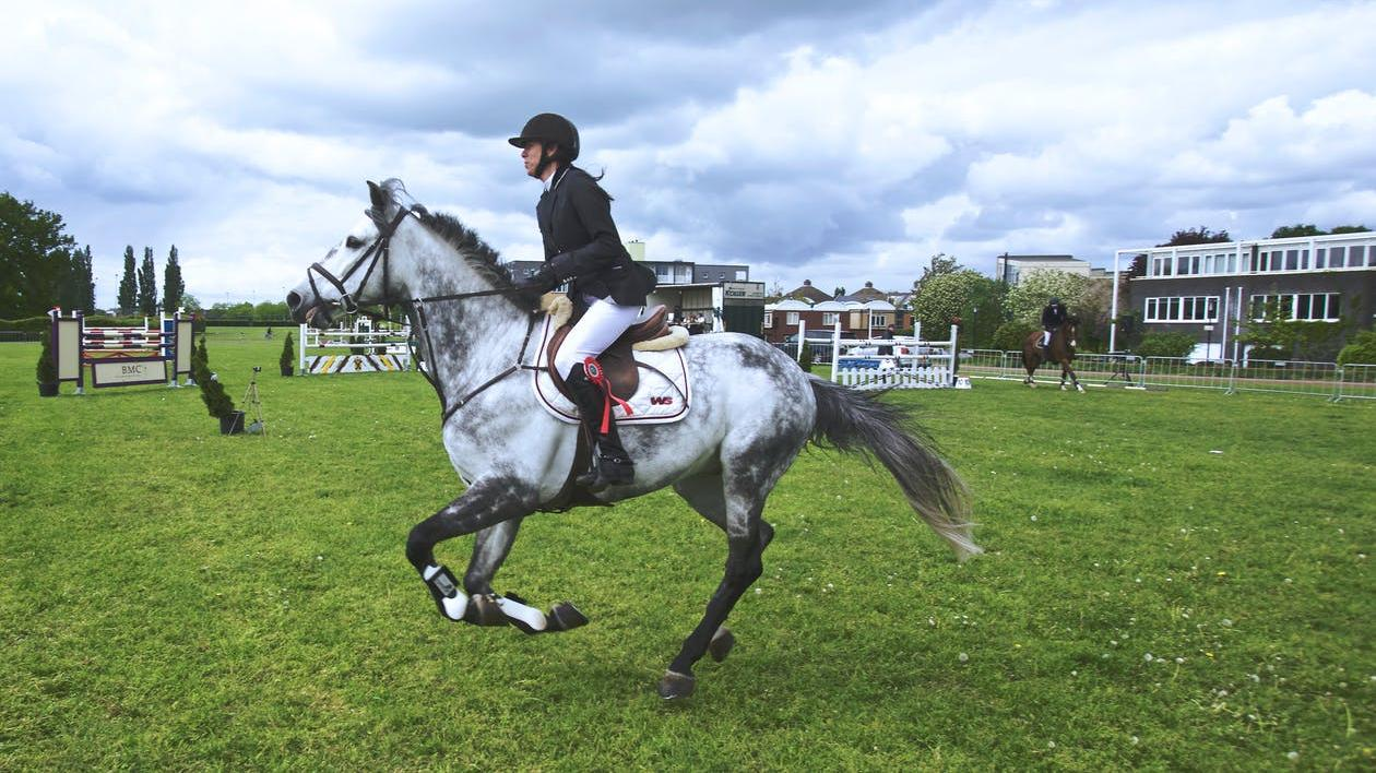 Pferde springen normalerweise nur, wenn sie auf der Flucht sind.