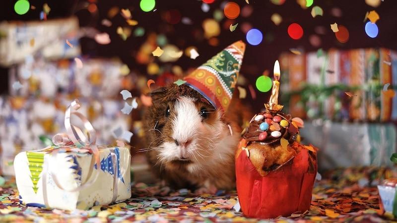 Geburtstag online feiern - die besten Ideen