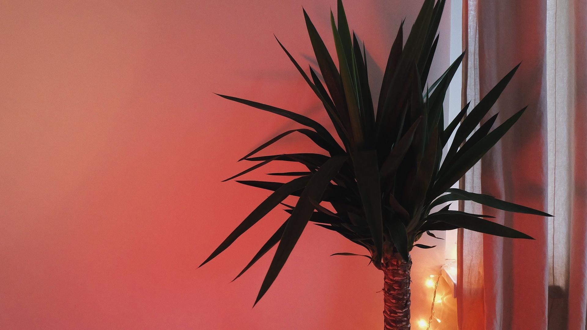 Palmen können sehr gut in einem temperierten Wintergarten mit einer Temperatur von fünf bis fünfzehn Grad gehalten werden.