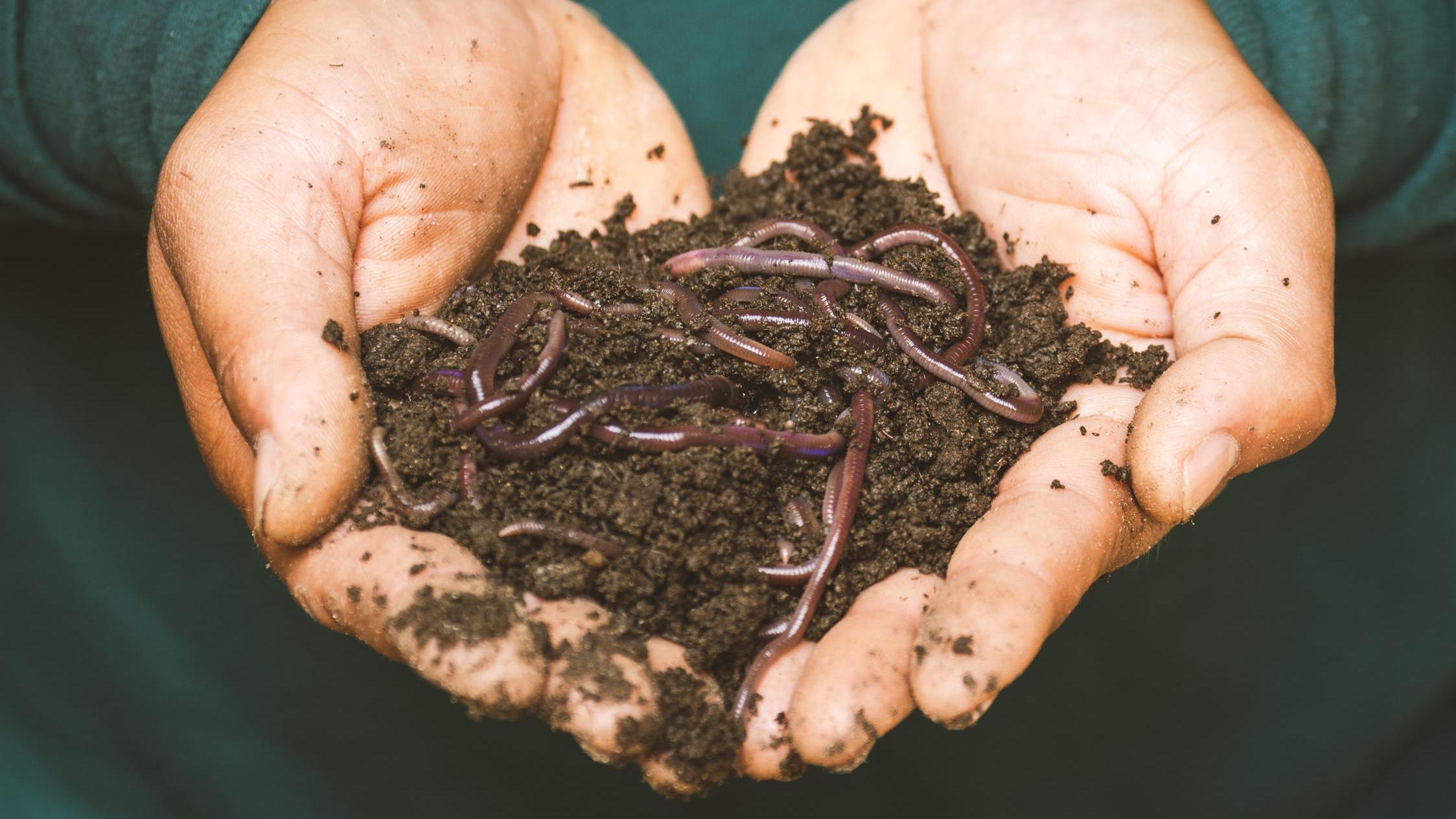 Bodenanalyse selber machen - so geht's