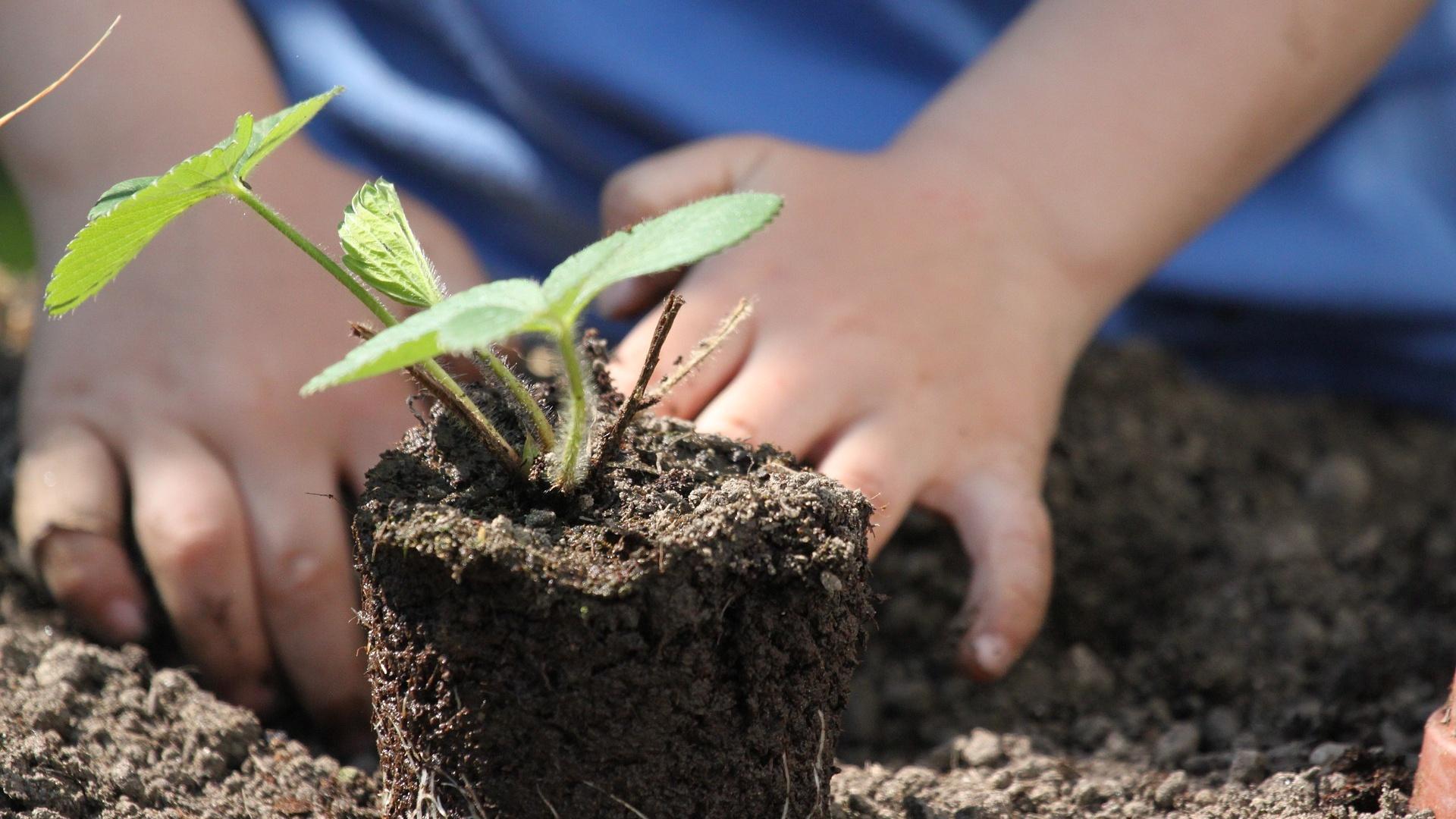 Beim Bepflanzen eines Hügelbeetes sollten Sie einige Aspekte beachten.
