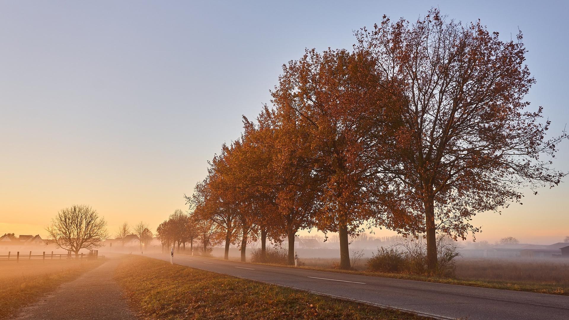Für die Verkehrssicherungspflicht bei Bäumen ist grundsätzlich der Eigentümer des Grundstücks, auf dem die Bäume stehen, verantwortlich.