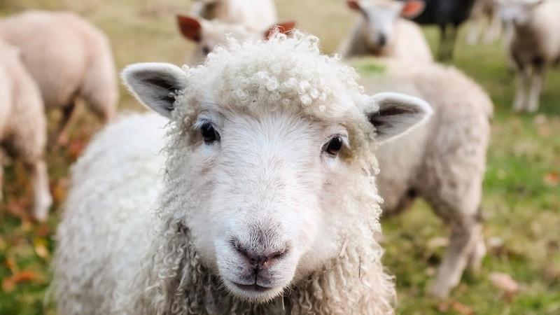 Tierquälerei betrifft alle Tiere und muss gemeldet werden.