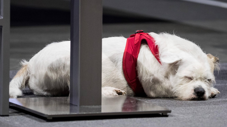 Der erste Hund: Das sollten Sie wissen