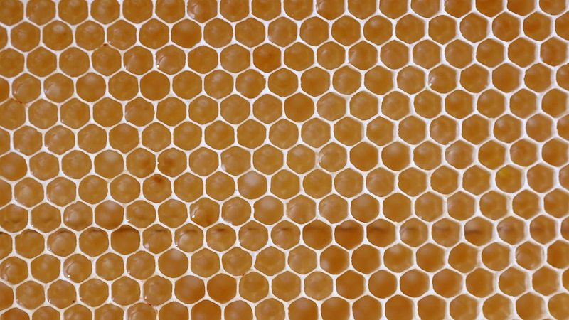 Bienenwachs essen: Kann man die Honigwaben essen?