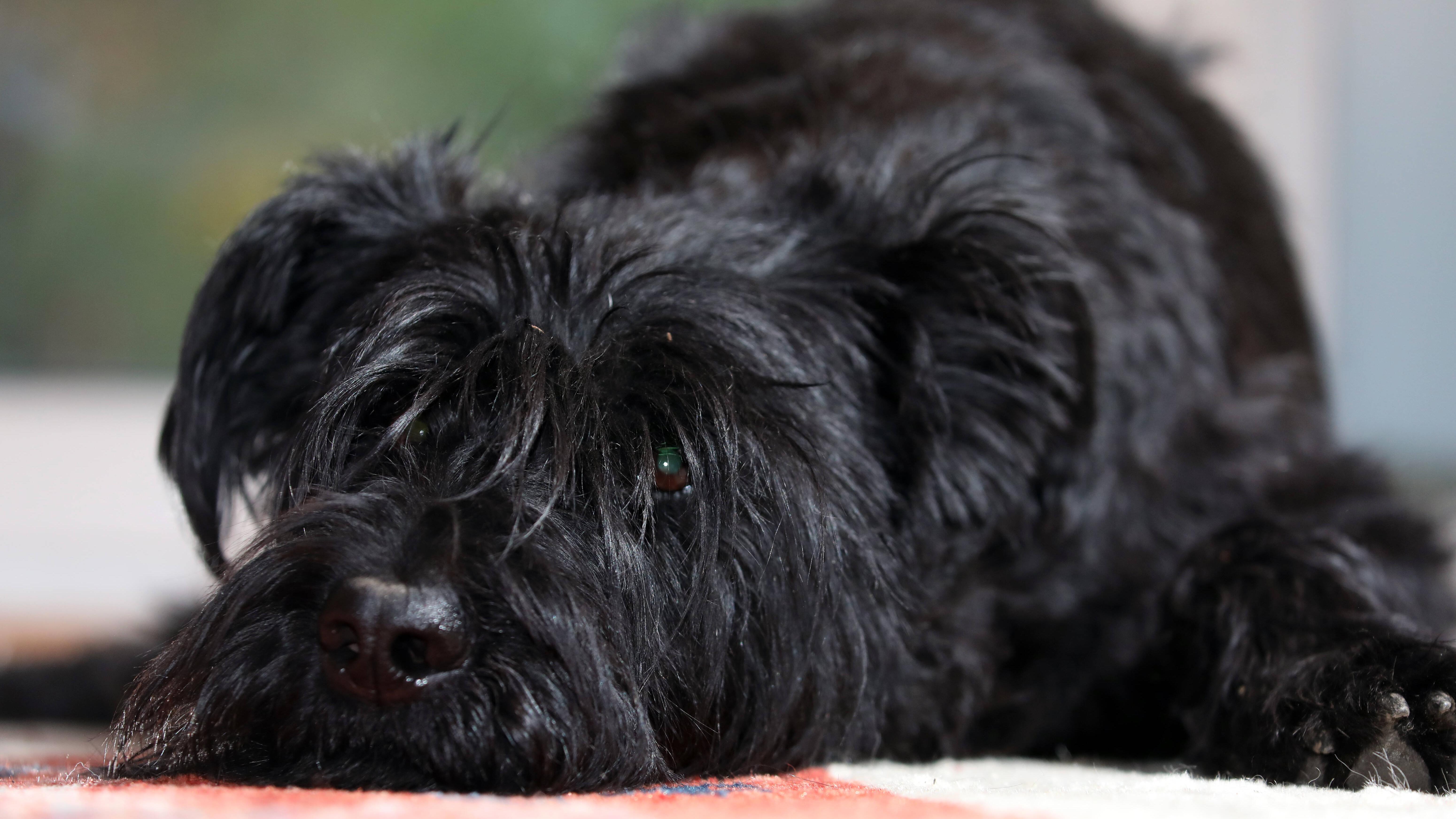 Rückenschmerzen beim Hund: Ursachen und Behandlung