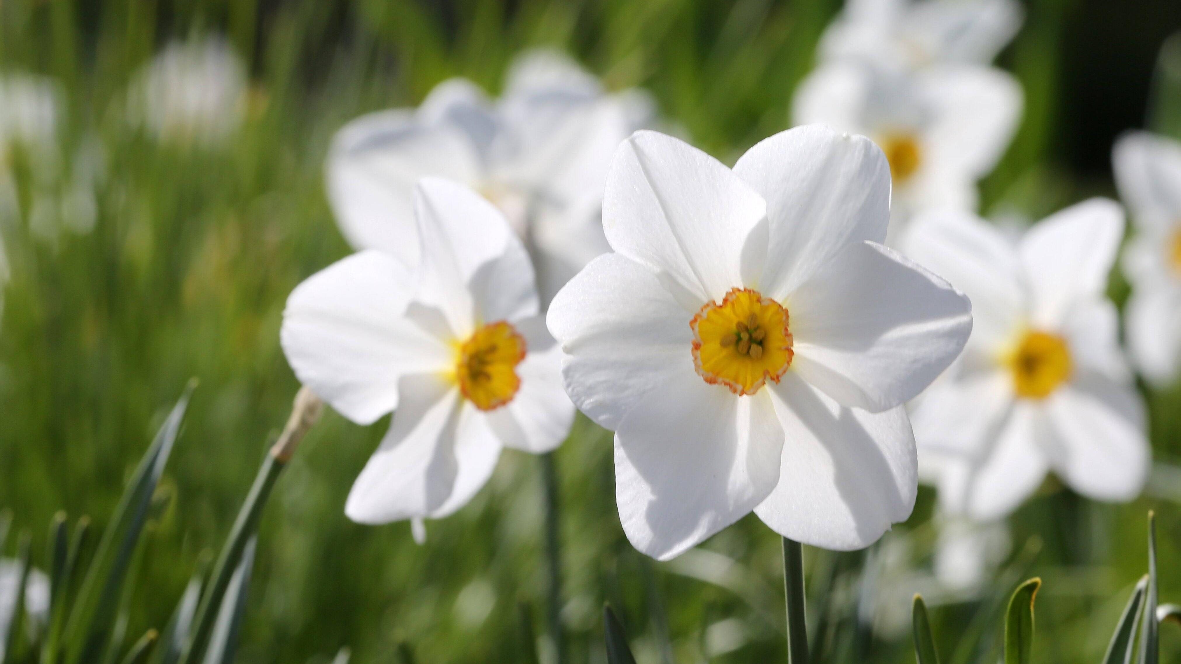 Prüfen Sie die Blumenzwiebeln vor dem Kauf.