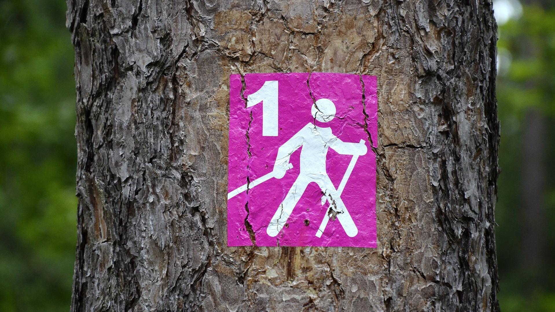 Mit Nordic Walking können Sie gelenkschonend abnehmen und Ihre Fitness verbessern.