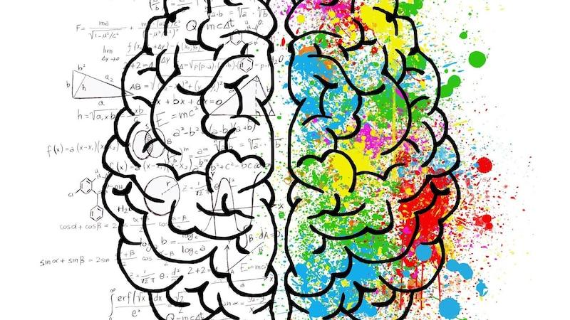 Rechte und linke Gehirnhälfte: Aufbau und Funktion des Gehirns