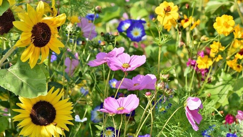 Legen Sie eine Blumenwiese an, schaffen Sie ein kleines Tierparadies