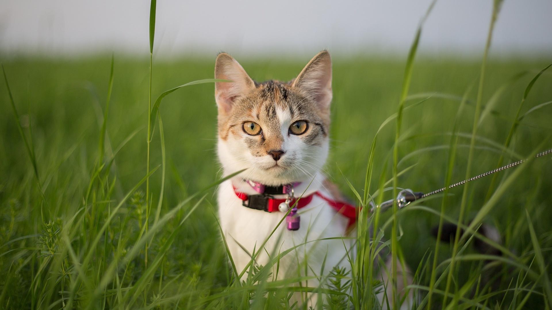 Mit Katze Gassi gehen - Infos und Hinweise